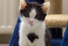 Katzenbilder Schwarz Weiß 220x150 - Katzenbilder Schwarz Weiß