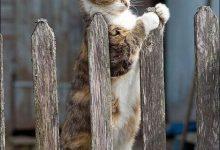 Katzenbilder Witzig 220x150 - Katzenbilder Witzig