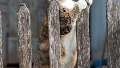 Katzenbilder Witzig 390x220 - Katzenbilder Witzig