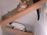 Katzenbilder Witzig Bilder Kostenlos 200x150 - Katzenbilder Witzig Bilder Kostenlos