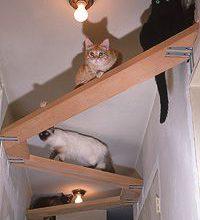 Katzenbilder Witzig Bilder Kostenlos 200x220 - Katzenbilder Witzig Bilder Kostenlos