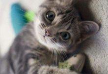 Katzenbilder Zum Ausdrucken Gratis 220x150 - Katzenbilder Zum Ausdrucken Gratis