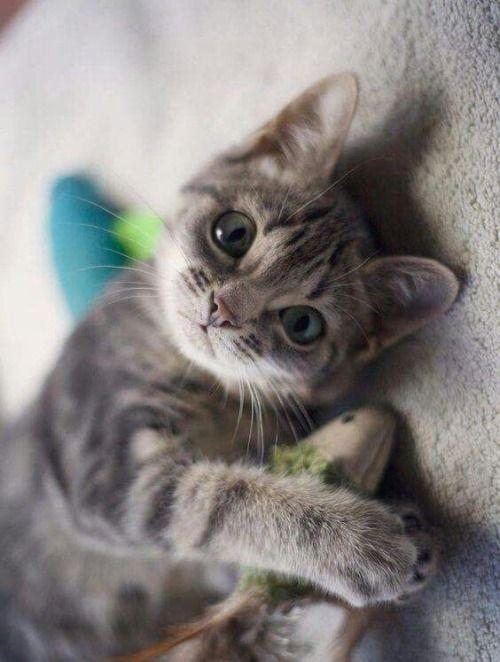 Katzenbilder Zum Ausdrucken Gratis - Katzenbilder Zum Ausdrucken Gratis