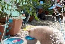 Katzenbilder Zum Ausdrucken Und Ausmalen 220x150 - Katzenbilder Zum Ausdrucken Und Ausmalen