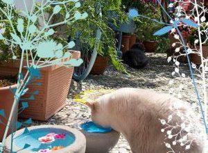 Katzenbilder Zum Ausdrucken Und Ausmalen 300x220 - Katzenbilder Zum Ausdrucken Und Ausmalen