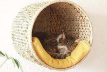 Katzenforum Bilder Kostenlos 220x150 - Katzenforum Bilder Kostenlos