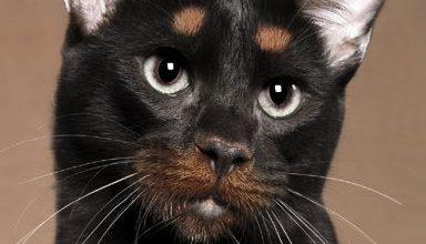 Katzenfotografie 384x220 - Katzenfotografie