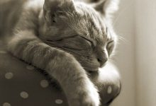 Katzenfotos Kostenlos Downloaden 220x150 - Katzenfotos Kostenlos Downloaden