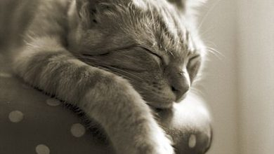 Katzenfotos Kostenlos Downloaden 390x220 - Katzenfotos Kostenlos Downloaden