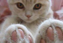Katzenfotos Mit Sprüchen 220x150 - Katzenfotos Mit Sprüchen