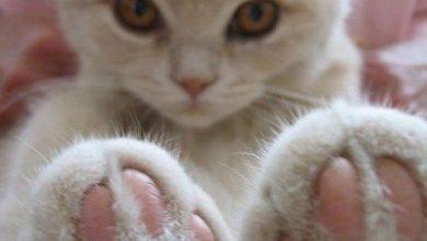 Katzenfotos Mit Sprüchen 390x220 - Katzenfotos Mit Sprüchen