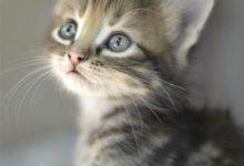 Katzenfotos Zum Ausdrucken 220x150 - Katzenfotos Zum Ausdrucken