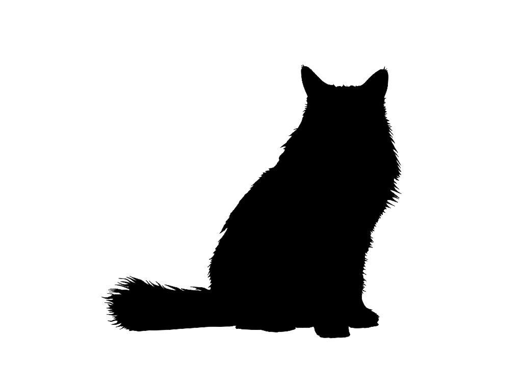 Katzenfotos - Katzenfotos