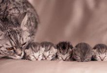 Katzenfreunde 220x150 - Katzenfreunde