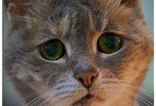 Katzengeburt 220x150 - Katzengeburt
