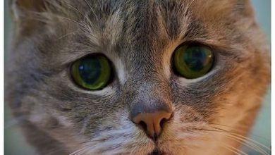 Katzengeburt 390x220 - Katzengeburt