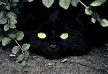 Katzenjunges 220x150 - Katzenjunges