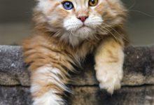 Katzenkastration 220x150 - Katzenkastration