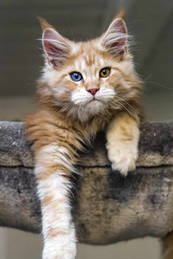 Katzenkastration - Katzenkastration