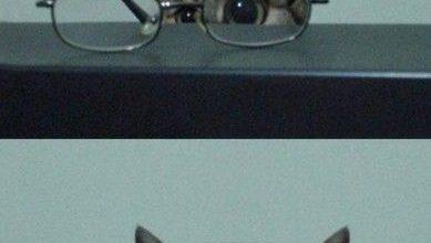 Katzenkauf 389x220 - Katzenkauf