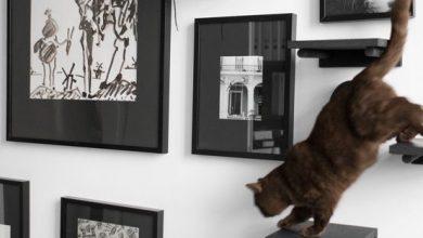 Katzenklo 390x220 - Katzenklo