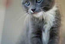 Katzenkrankheiten 220x150 - Katzenkrankheiten