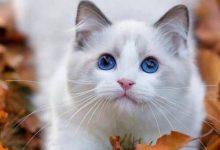 Katzenleukose 220x150 - Katzenleukose