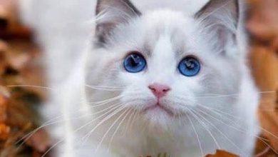 Katzenleukose 390x220 - Katzenleukose