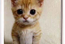 Katzenliebhaber 220x150 - Katzenliebhaber