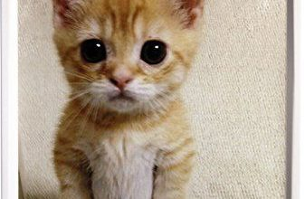 Katzenliebhaber 337x220 - Katzenliebhaber