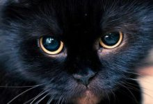 Katzenmagazin 220x150 - Katzenmagazin