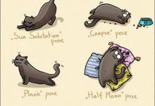 Katzenrassen Bilder 220x150 - Katzenrassen Bilder