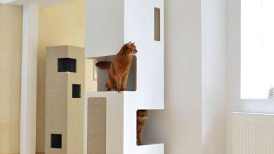 Katzenrassen Bilder Mit Namen 390x220 - Katzenrassen Bilder Mit Namen
