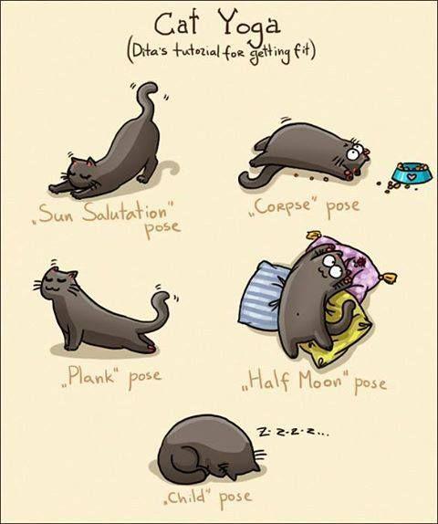 Katzenrassen Bilder - Katzenrassen Bilder