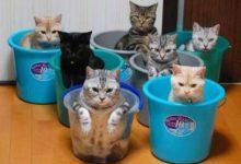 Katzenrassen Bildergalerie Bilder Kostenlos 220x150 - Katzenrassen Bildergalerie Bilder Kostenlos