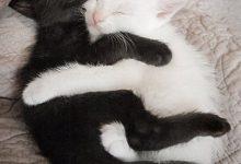 Katzenrassen Fotos Bilder Kostenlos 220x150 - Katzenrassen Fotos Bilder Kostenlos