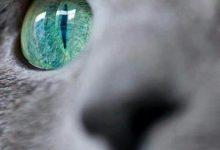 Katzenrassen Liste Bilder 220x150 - Katzenrassen Liste Bilder