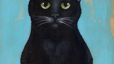 Katzenrassen Mit Bildern 390x220 - Katzenrassen Mit Bildern