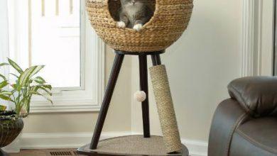 Katzenrassen Mit Bildern Und Namen 390x220 - Katzenrassen Mit Bildern Und Namen