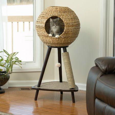Katzenrassen Mit Bildern Und Namen - Katzenrassen Mit Bildern Und Namen