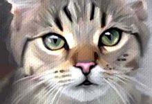 Katzenrassen Mit Foto 220x150 - Katzenrassen Mit Foto