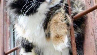 Katzenrassen Und Bilder 390x220 - Katzenrassen Und Bilder