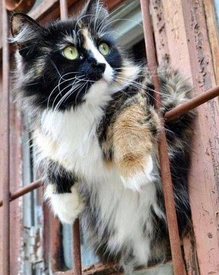 Katzenrassen Und Bilder - Katzenrassen Und Bilder