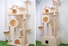 Katzenshow 220x150 - Katzenshow