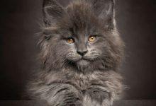 Katzenspielzeug 220x150 - Katzenspielzeug
