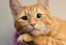 Katzenzeitung 220x150 - Katzenzeitung