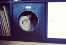 Katzenzuchtverein 220x150 - Katzenzuchtverein