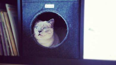 Katzenzuchtverein 390x220 - Katzenzuchtverein