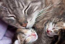 Kitten Bilder 220x150 - Kitten Bilder