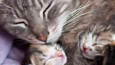 Kitten Bilder 390x220 - Kitten Bilder